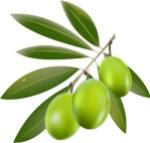 izraelinfo logo